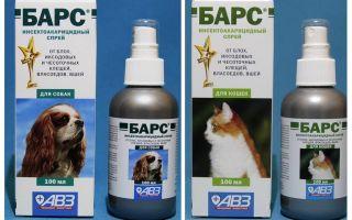Spray baruri de purice pentru pisici și câini