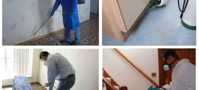 Dezinsecție de purici în apartament prin servicii profesionale