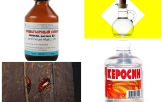 Cele mai eficiente remedii folclorice pentru gândaci