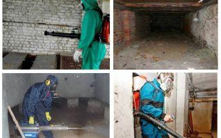 Cum să scapi de puricii de la subsol în apartament