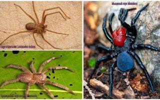 Descriere și fotografii ale celor mai periculoși păianjeni din lume