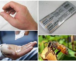 Ce să faci dacă o albină