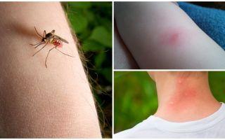 Care este diferența dintre o mușcătură de țânțar și o mușcătură sau o mușcătură?