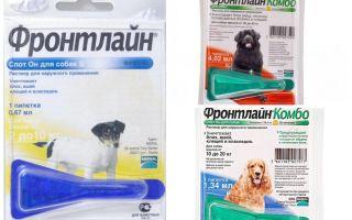 Creează prima linie a puricilor pentru câini