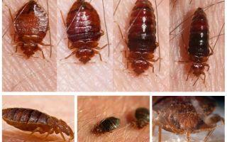 Ce bug-uri mănâncă și cine le mănâncă