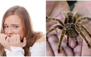Care este numele fricii de păianjeni (fobie) și metodele de tratament