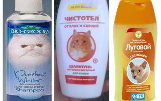 Cât de des pot să mă spăl cu șampon de purici