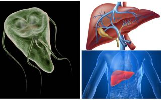 Giardia în ficat - simptome și tratament