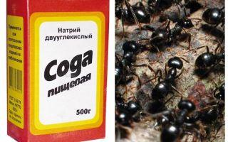 Soda împotriva furnicilor din grădină