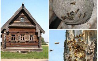Cum să obțineți albinele din casa de lemn și din alte locuri