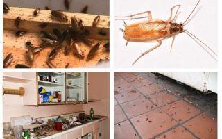 Ce să faceți dacă ați văzut un gândac în bucătărie