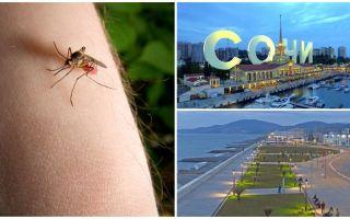 Există țânțari în Sochi și Adler