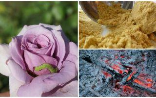 Cum se pulverizează trandafiri din omizi și afide