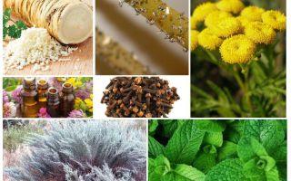 Blackfly Remedies