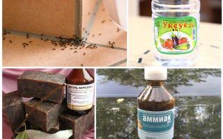 Combaterea furnicilor într-o casă sau un apartament