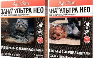Dana Ultra Neo picături de purice pentru pisici și câini