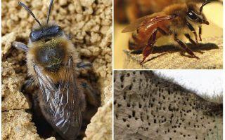 Cum să eliminați albinele de pe pământ