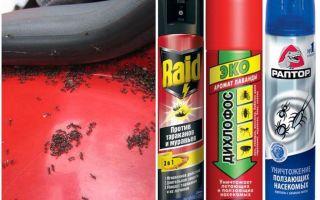 Cum să scoți furnicile din mașină