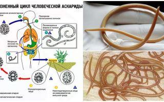 Simptomele și tratamentul ascariasis la adulți