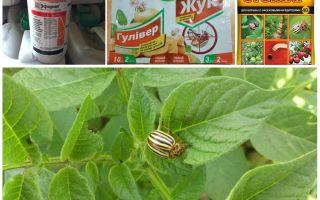 Cele mai eficiente otrăvuri și otrăvuri din gândacul de cartof Colorado