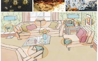 Ce și cum să otrăviti bug-uri acasă