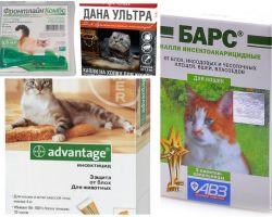 Picături pe greabăn de la purice pentru pisici și pisoi