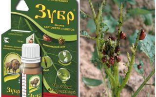 Poison Bison de la gândacul de cartof Colorado