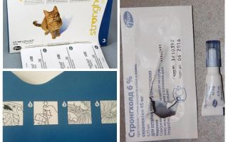 Cele mai bune picături pe greabăn pentru pisici de purici și viermi