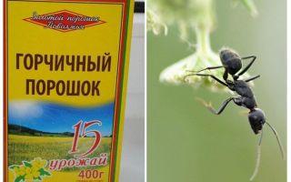Pudra de muștar de la furnici și afide din grădină