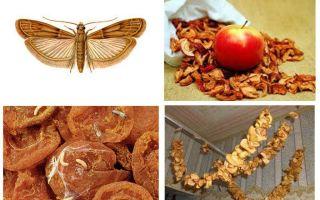 Ce trebuie să faceți dacă moliul pornește în merele uscate