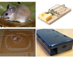 Cum să eliminați șoareci dintr-o casă privată
