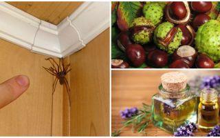 Metode și instrumente pentru păianjeni într-un apartament sau o casă privată