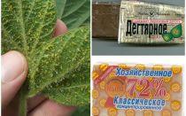 Gustul și săpunul de uz casnic din afide pe plante