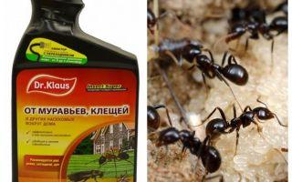 Dr. Klaus de la furnici și căpușe