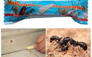 Creion Masha de la furnici