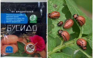 Remediu pentru gândacul de cartof Bushido Colorado: instrucțiuni de utilizare, eficacitate, recenzii