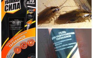 Remediu Forța de distrugere a gândacilor