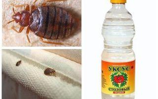 Oțet împotriva albinarelor din apartament