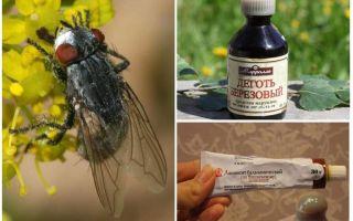 Remediu pentru gadfly și cai pentru oameni
