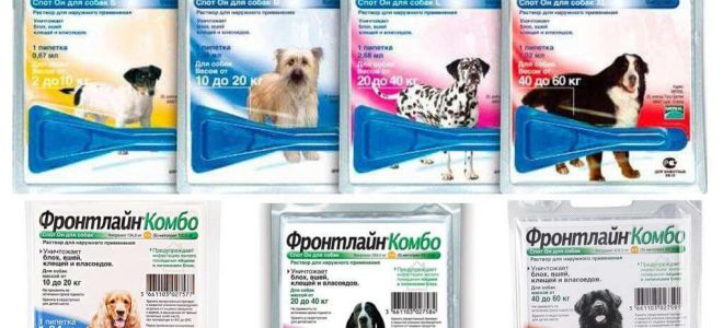 Manipularea câinilor de purici și biciuiți