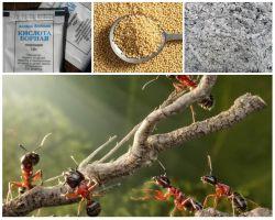 Combaterea furnicelor în grădinile de complot folclorice