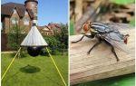 Capcane domestice pentru gadflies și gadflies