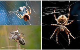Pe măsură ce păianjenul țese o țesătură