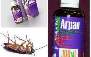 Agran remediu pentru gândaci