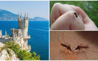 Există țânțari în Crimeea