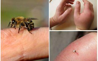 Ce este intepatura albinelor utile pentru o persoană?