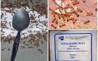 Cum să tratăm furnicile roșii