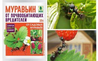 Furnici 10g din furnici: instrucțiuni de utilizare și recenzii