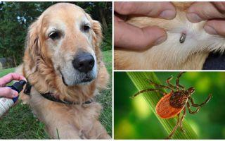 Spray-uri pentru câini împotriva căpușelor și purici