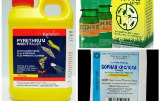 Remedii profesionale pentru gândaci